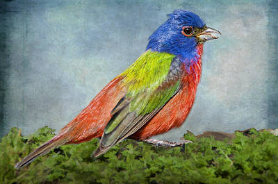 Painted Bunting Portrait Poster by Bonnie Barry