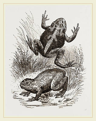 Painted Frogs Poster by Litz Collection