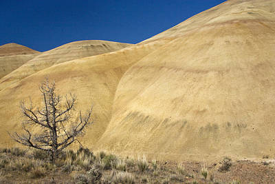 Poster featuring the photograph Painted Hills Tree by Sonya Lang