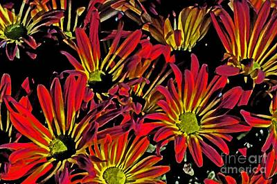 Painted Mums Poster by Judy Wolinsky