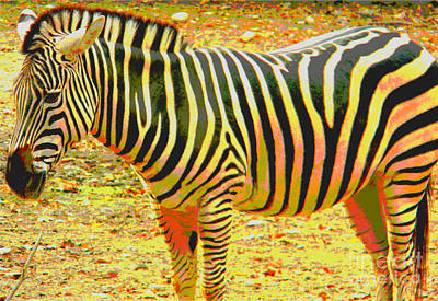 Painted Zebra Poster