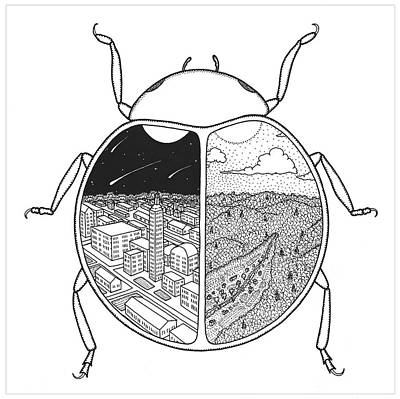 Paired Beetle Poster by Rob Messick