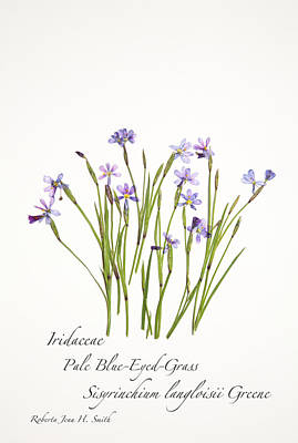 Pale Blue-eyed Grass Poster
