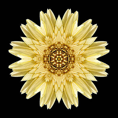 Poster featuring the photograph Pale Yellow Gerbera Daisy I Flower Mandala by David J Bookbinder