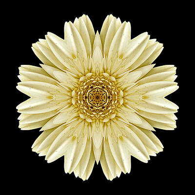 Poster featuring the photograph Pale Yellow Gerbera Daisy IIi Flower Mandala by David J Bookbinder