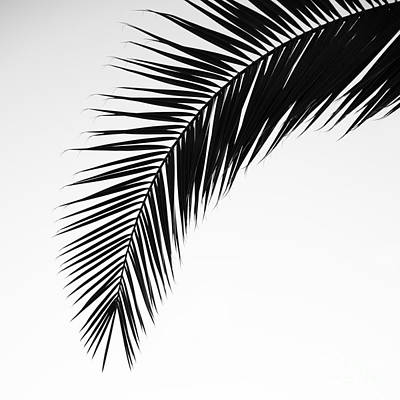 Palm Abstract Poster by Tamara Becker