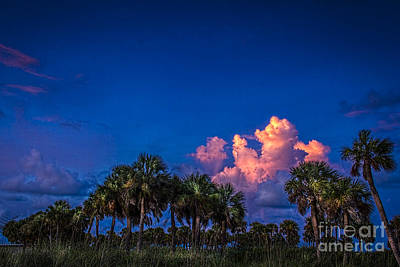 Palm Clouds Poster by Marvin Spates