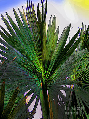 Palm Fan In David - Panama Poster