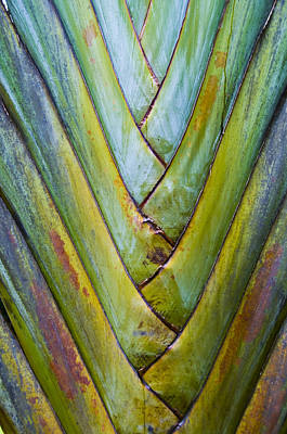 Palm Frond Poster