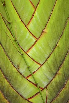 Palm Frond Pattern, Coral Coast, Viti Poster by David Wall