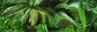 Palm Fronds And Green Vegetation Poster