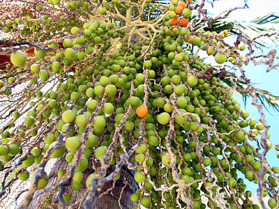 Palm Grapes Poster