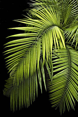 Palm Leaves Poster by Judy  Johnson