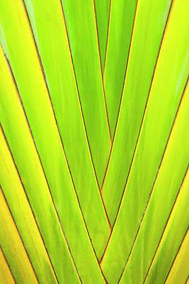 Palm Tree, Honduras Poster