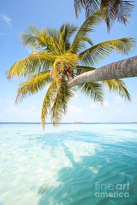 Palm Tree Leaning Over Water - Maldives Poster
