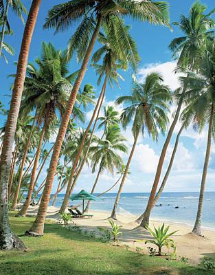 Palm Tree Near Beach Poster