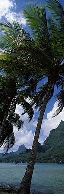 Palm Tree On Cooks Bay With Mt Mouaroa Poster by Panoramic Images