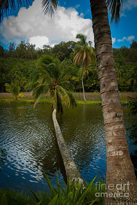 Palm Tree Over River Poster