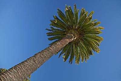Palm Tree, Seymour Square, Blenheim Poster by David Wall