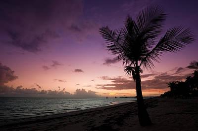 Palm Tree Sunrise Poster by Sebastian Musial
