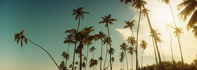 Palm Trees Along The Beach In Morro De Poster by Panoramic Images