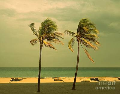 Palm Trees At Hallendale Beach Poster