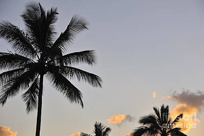 Palm Trees At Sunrise Poster by Sami Sarkis