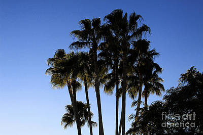 Poster featuring the photograph Palm Trees by Chris Thomas