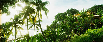 Palm Trees Covering A Small Bungalow Poster by Panoramic Images