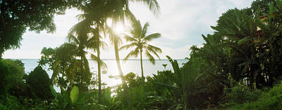 Palm Trees In The Forest At Coast Poster by Panoramic Images