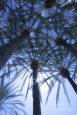 Poster featuring the photograph Palm Trees In The Sun by Jerry Cowart