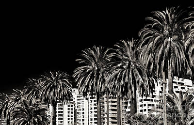 Palm Trees In Vina Del Mar Poster by John Rizzuto