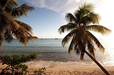 Palm Trees On Beach At Sunset, Culebra Poster