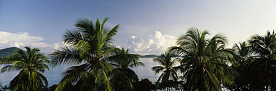 Palm Trees On The Beach, St. Thomas, Us Poster by Panoramic Images