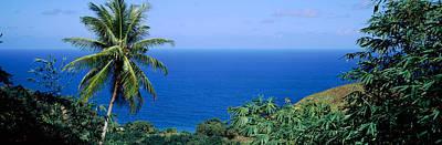 Palm Trees On The Coast, Tobago Poster