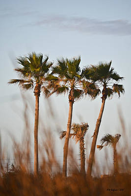 Palm Trees Through Tall Grass Poster