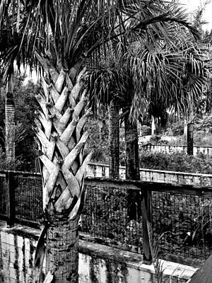 Palms And Walls In Black And White Poster