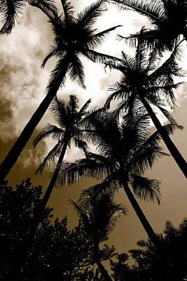 Palms Poster by AR Annahita