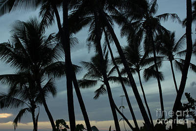 Poster featuring the photograph Palms At Dusk by Suzanne Luft