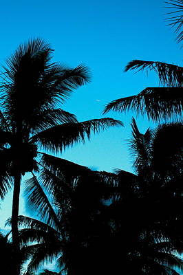 Palms At Dusk With Sliver Of Moon Poster by Lehua Pekelo-Stearns