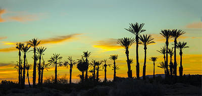 Palm Trees At Dawn Poster