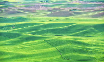 Palouse In Spring Poster