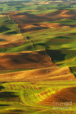 Palouse Morning Poster