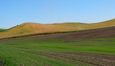 Palouse Patchwork 2 Poster by Anne Mott