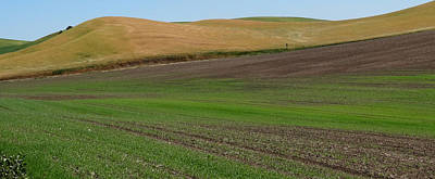 Palouse Patchwork 3 Poster by Anne Mott