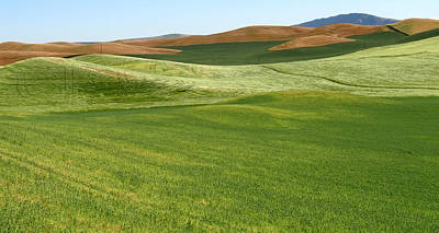 Palouse Patchwork 5 Poster by Anne Mott