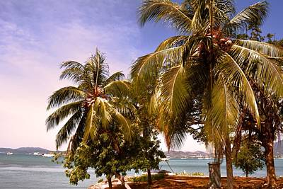 Panoramic View Of Nature With The Green Coconut Trees  Poster by Siti  Syuhada