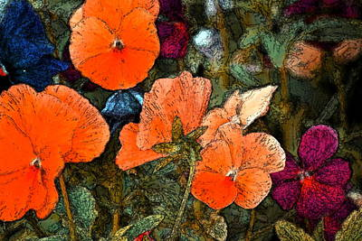 Pansy 10 Poster by Pamela Cooper