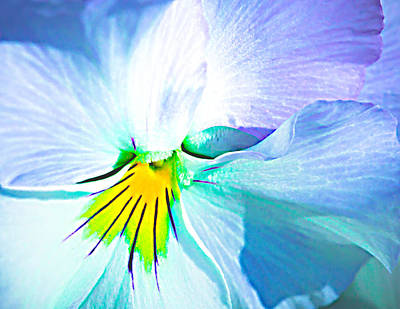 Pansy Flower 6 Poster