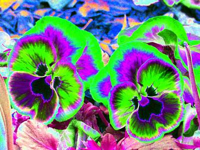 Pansy Power 60 Poster by Pamela Critchlow